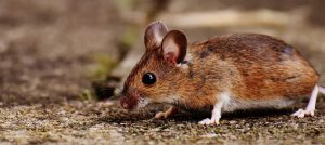 mice ants and other pests can invade your air conditioner